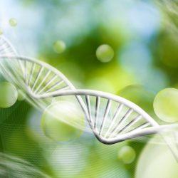 Sind wir Gene oder Umwelt?